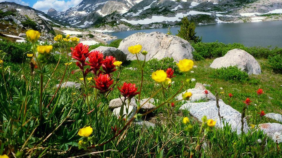 Mountain spring2.jpg