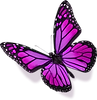 Purple-BUTTERFLY.png