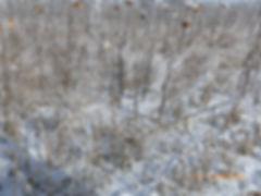 P1010876_Winterbild H. Kayser.JPG