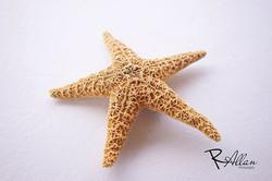StarLife 😂 _yungworldabm 😎