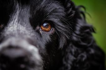Dogs eye portrait.jpg