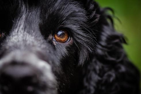 Dogs eye portrait