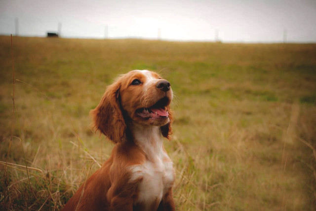 Puppy Portrait .jpg