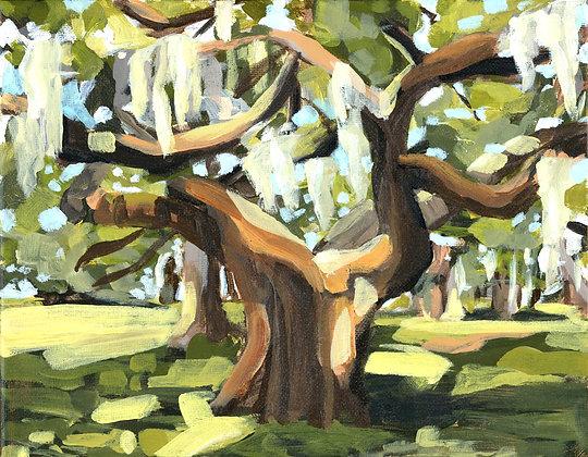Evergreen | Horizontal Canvas Print