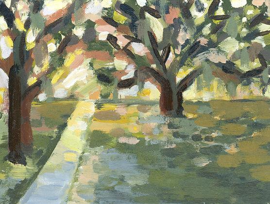 Shady Oaks   Landscape Canvas Print