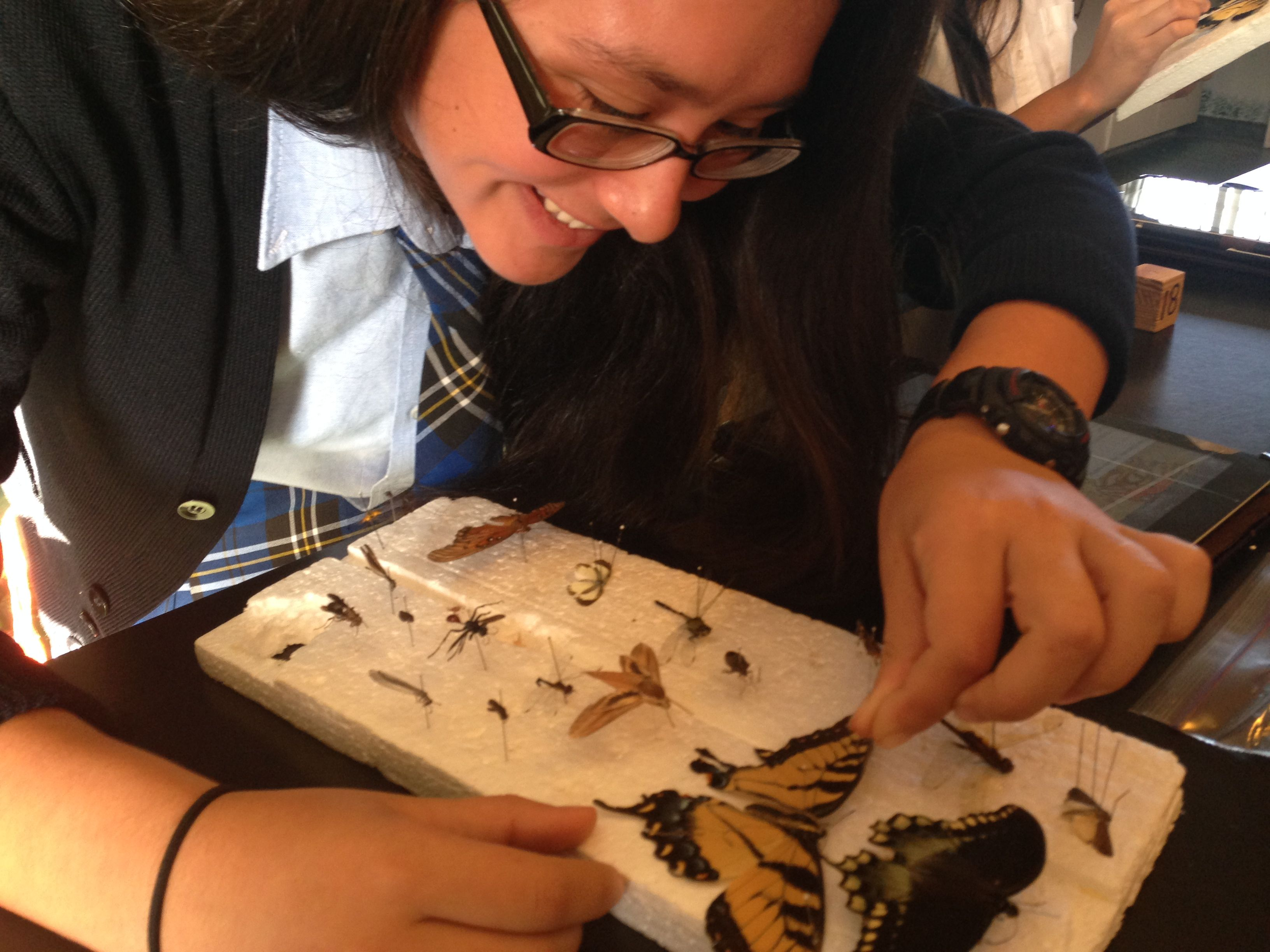 PBL - Insects