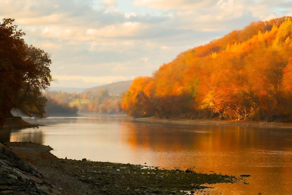rhin_automne-0021.jpg