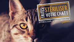 Faîtes stériliser votre chat.jpeg