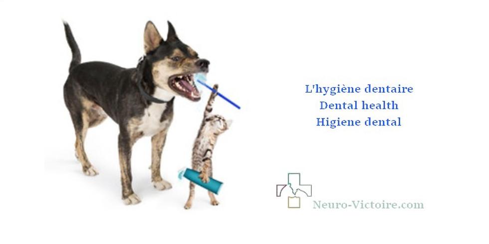 Hygiène de votre animal : les dents