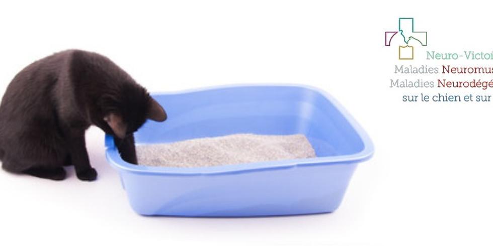 La litière du chat