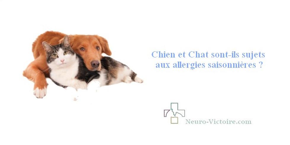 Chien et Chat sont-ils sujets aux allergies saisonnières