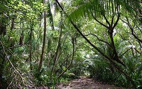 tropics-jungle-wood-vegetation-trees-110