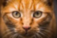 Cat Image.jpg