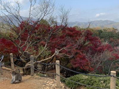 arashyama monkey park