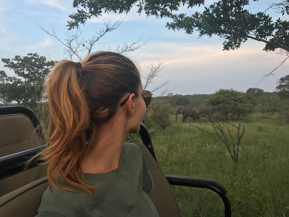 safari simbambili