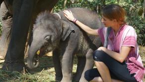 Uma tarde com os elefantes - Eco turismo em Chiang Mai