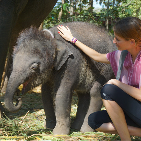 An afternoon with the Elephants - Eco Tourism in Chiang Mai