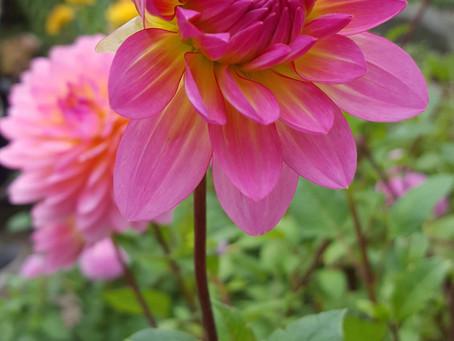 Summer flowers carry such light