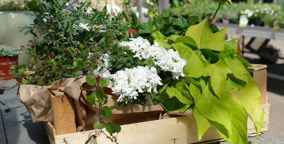 Blumenkörbchen Weiß Grün