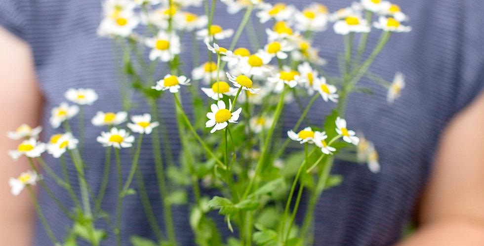 Blumenkiste - ABO
