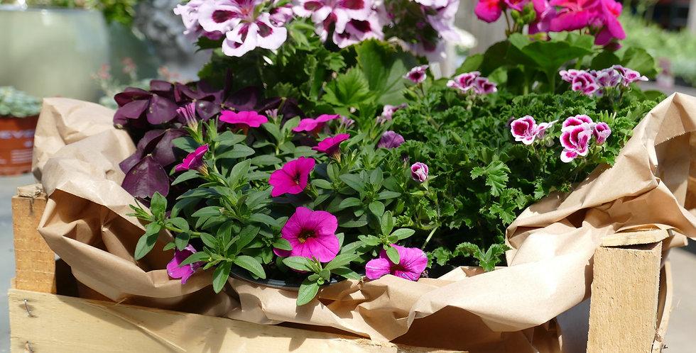 Blumenkörbchen Rosa|Pink