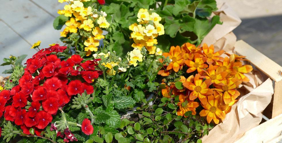 Blumenkörbchen Gelb|Orange