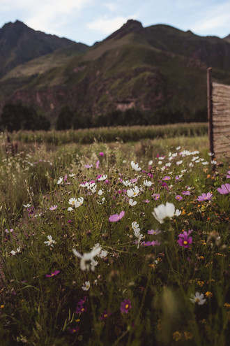 Mountains and Wildflowers outside yoga room @ Nidra Wasi