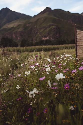 Mountains and Wildflowers outside yoga room @ Nidra Wasi