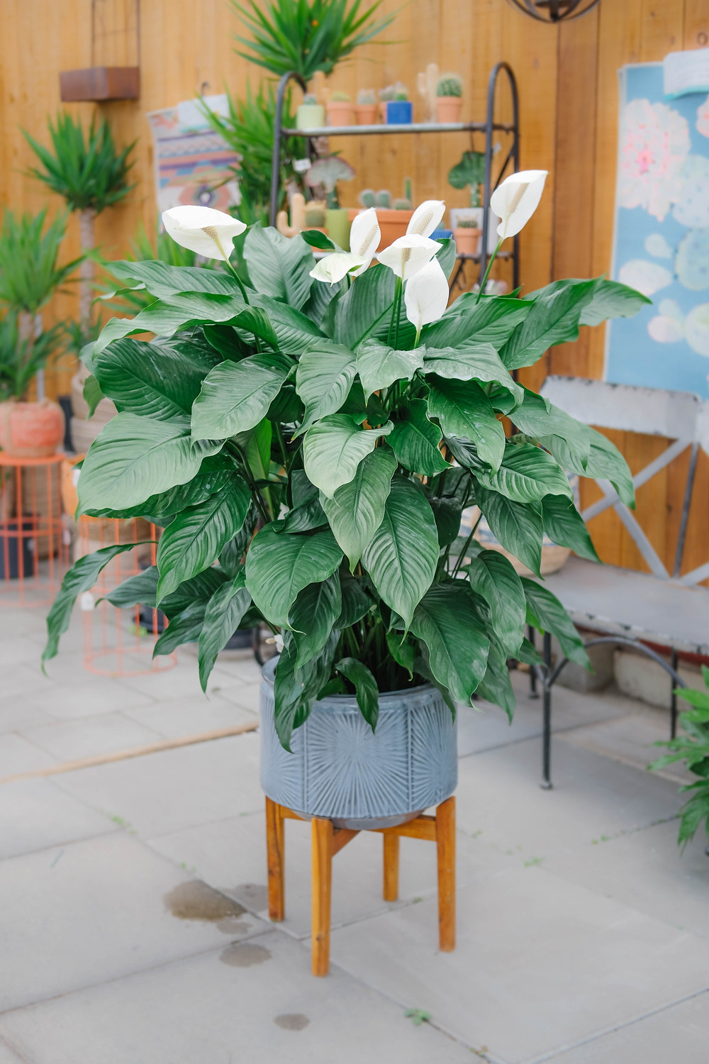 Green Indoor Plant with White Flower Peace Lily