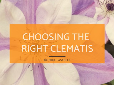 Choosing the Right Clematis