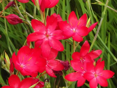 Eight Great Midsummer Blooms