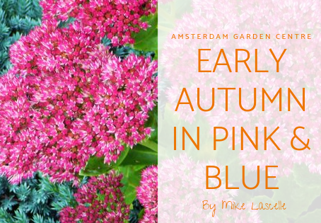 Early Autumn in Pink & Blue