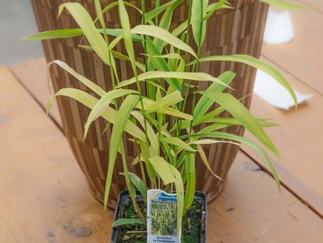 A Recipe For Success: Mixed Sun & Shade Planter