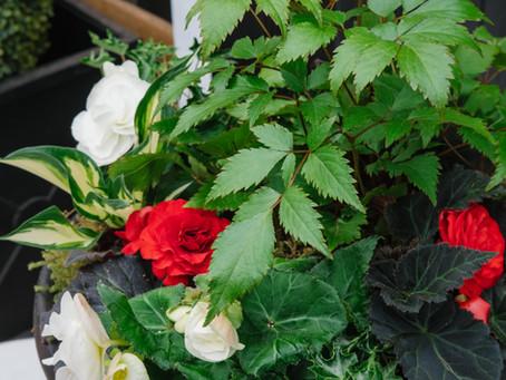 Recipe for Success: Spring Shade Planter