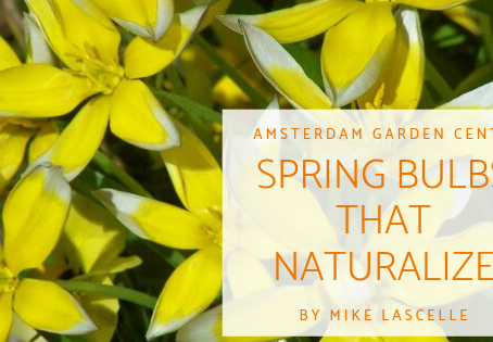 Spring Bulbs that Naturalize