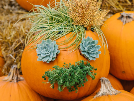 A Recipe For Success: Succulent & Grass Jack-O-Lantern
