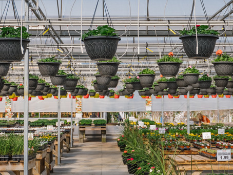 Welcome to the new Amsterdam Garden Centre Blog