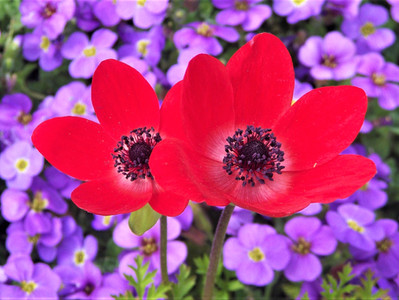 Awesome Anemones