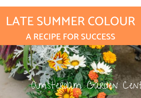 A Recipe for Success - Late Summer Colour Planter
