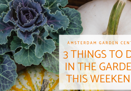 Three Things to do in (or for) Your Garden This Weekend!