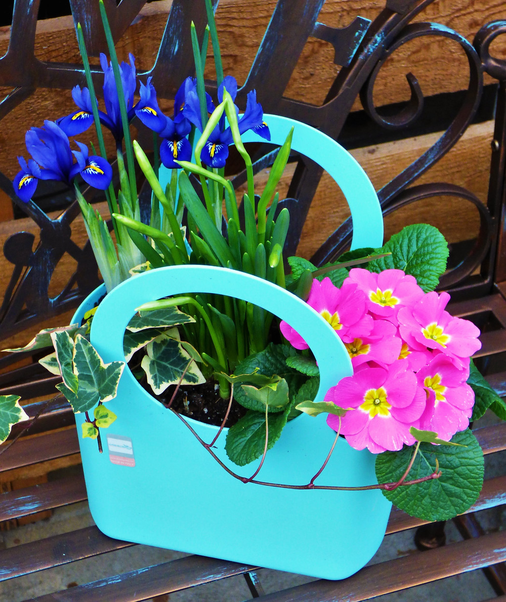 Polyantha purse planter.