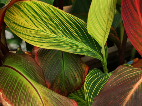 5 Plants for Privacy Screens