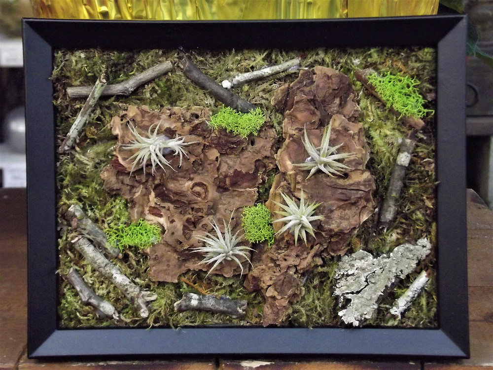 Frame mounted Air Plants.