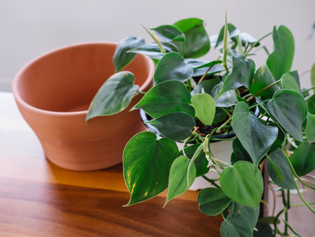Houseplants: Using Pots & Containers Without Drainage