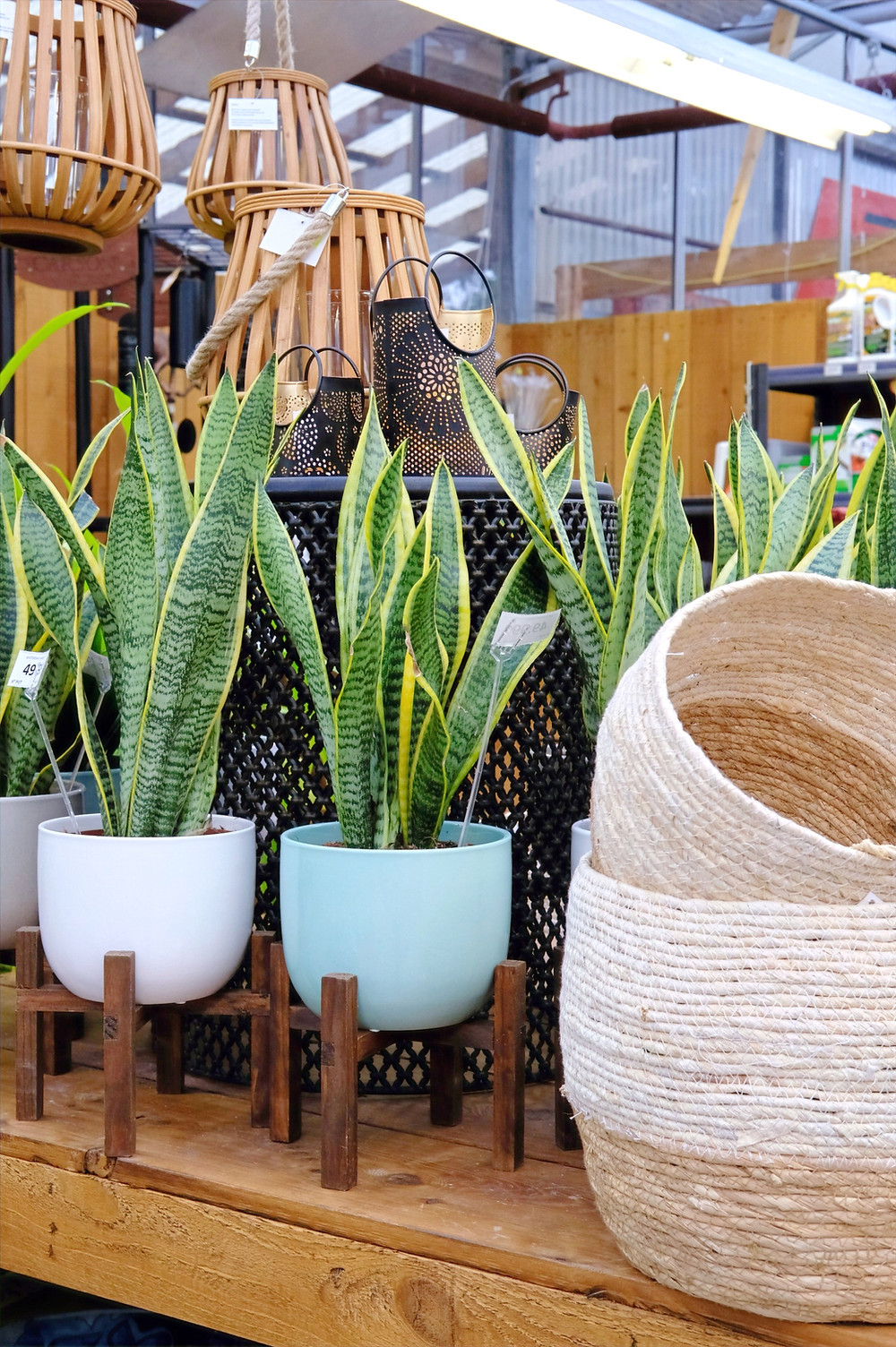 Caring For Your Houseplants: Repotting & Dividing ...