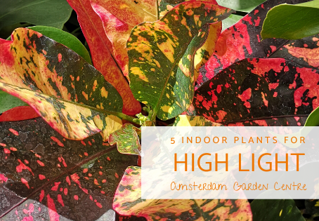 5 Indoor Plants for High Light Conditions