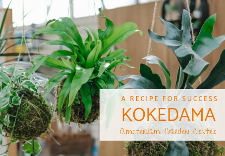 A Recipe for Success: Kokedama - Japanese Moss Balls
