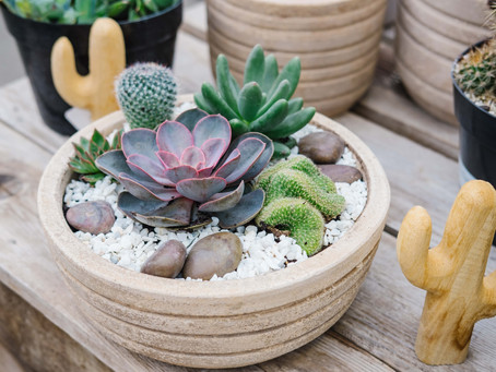 A Recipe For Success: Southwest Inspired Cactus & Succulent Planter
