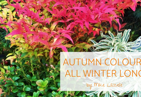 Autumn Colour…All Winter Long