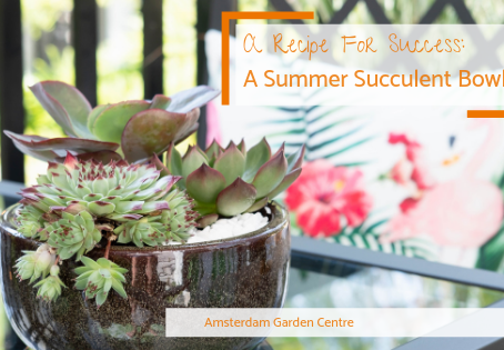 A Recipe For Success: A Summer Succulent Bowl